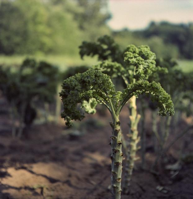 Healthy Food Dinosaur Kale by Metrix X