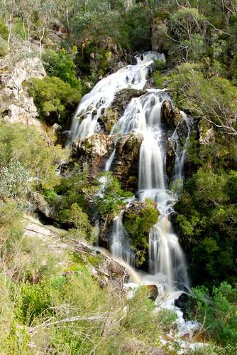 trees water waterfall bush australia victoria buchan eastgippsland buchancavesreserve springcreekfalls