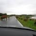 Driving from Brønnøysund to Sandnessjøen. Cows!