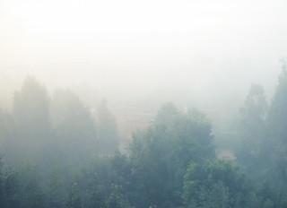 (238/365) Fog