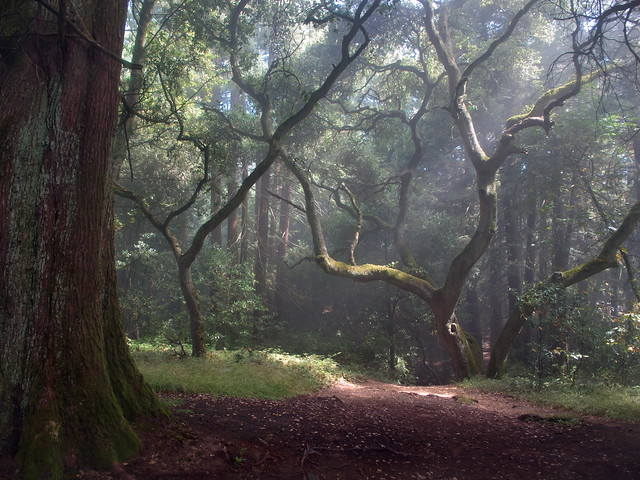 Sun and mist on Big Trees Trail