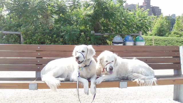 Costello Dog Park Manassas Va