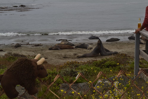 Buddy Watching Seals on Pacific Coast Highway