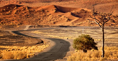 tree dunes namibia sossusvlei namibdesert