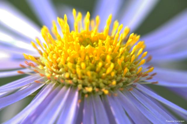 Epicenter of flower