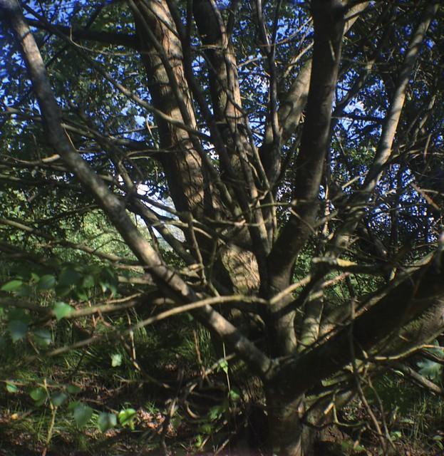 Hawkeye Nature Camera Review