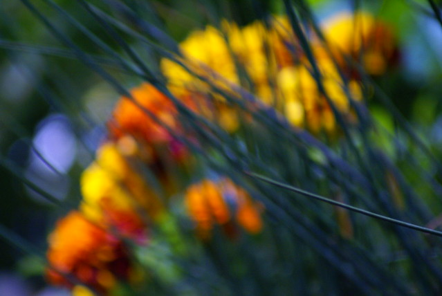 Plantando color