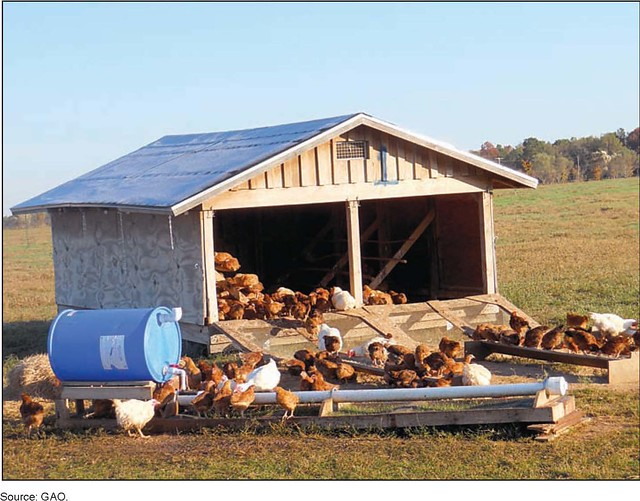 Figure 5 free range chickens at a portable chicken house for Portable hen house