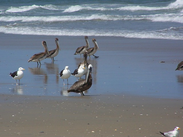 Birds are abundant on the beach and in the coastal forest