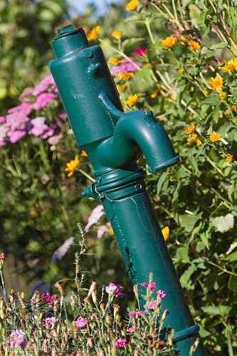 Acadia Valley B&B: Hand pump in garden [1 of 2]