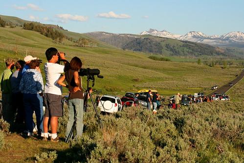 Yellowstone Wildlife Viewing | Robert Pahre at Illinois