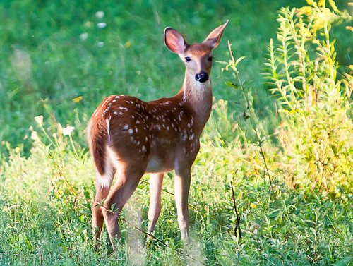 Sweet little fawn.
