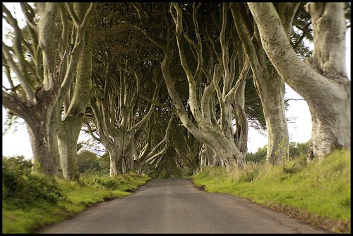The Dark Hedges (colour)