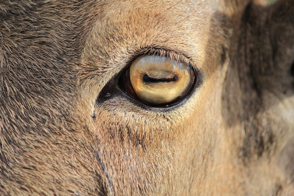 white eyeball