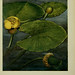 Pflanzen der Heimat