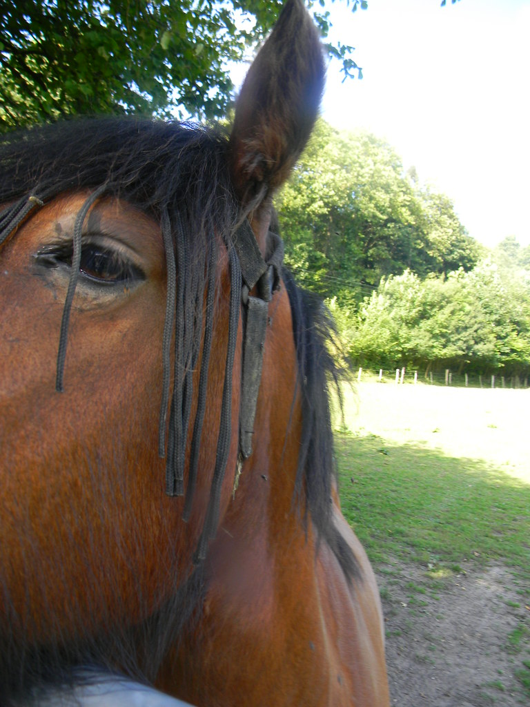 Horse with extensions Borough Green to Sevenoaks