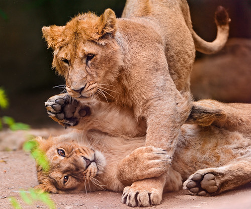 Playing siblings