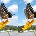Insects in 3D (cross) 昆虫の立体写真(交差法)