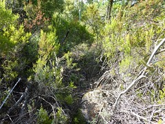 La sortie du premier bois de pins
