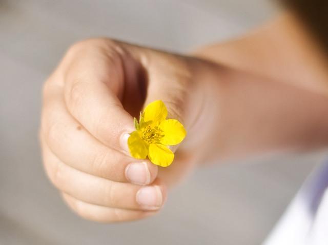 flowerfromoz-1