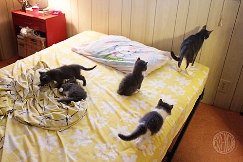 Kittens kittens everywhere secret agent josephine for How to keep cat from pooping on floor