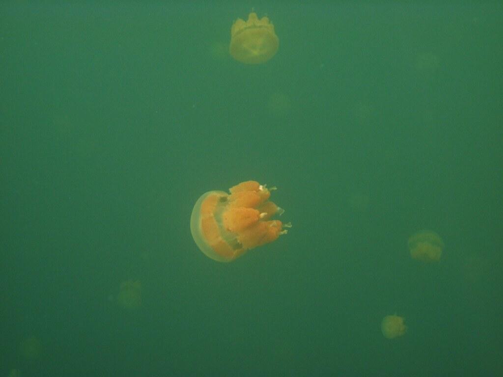 Lago de las Medusas-Trinidad y Tobago