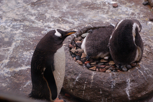 Penguin nest | Flickr ...