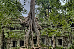 Old Growth Temple