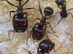 wasp(0.0), japanese rhinoceros beetle(0.0), membrane-winged insect(0.0), dung beetle(0.0), beetle(0.0), arthropod(1.0), animal(1.0), ant(1.0), invertebrate(1.0), insect(1.0), macro photography(1.0), fauna(1.0), close-up(1.0), pest(1.0),