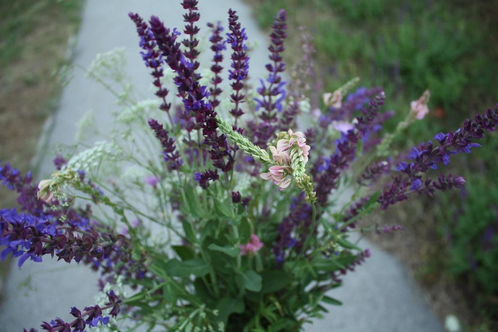 Unser täglicher Wiesenblumenstrauss