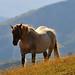 Cavallo (quasi) bianco by _@lbe_ (molto OFF e poco ON)