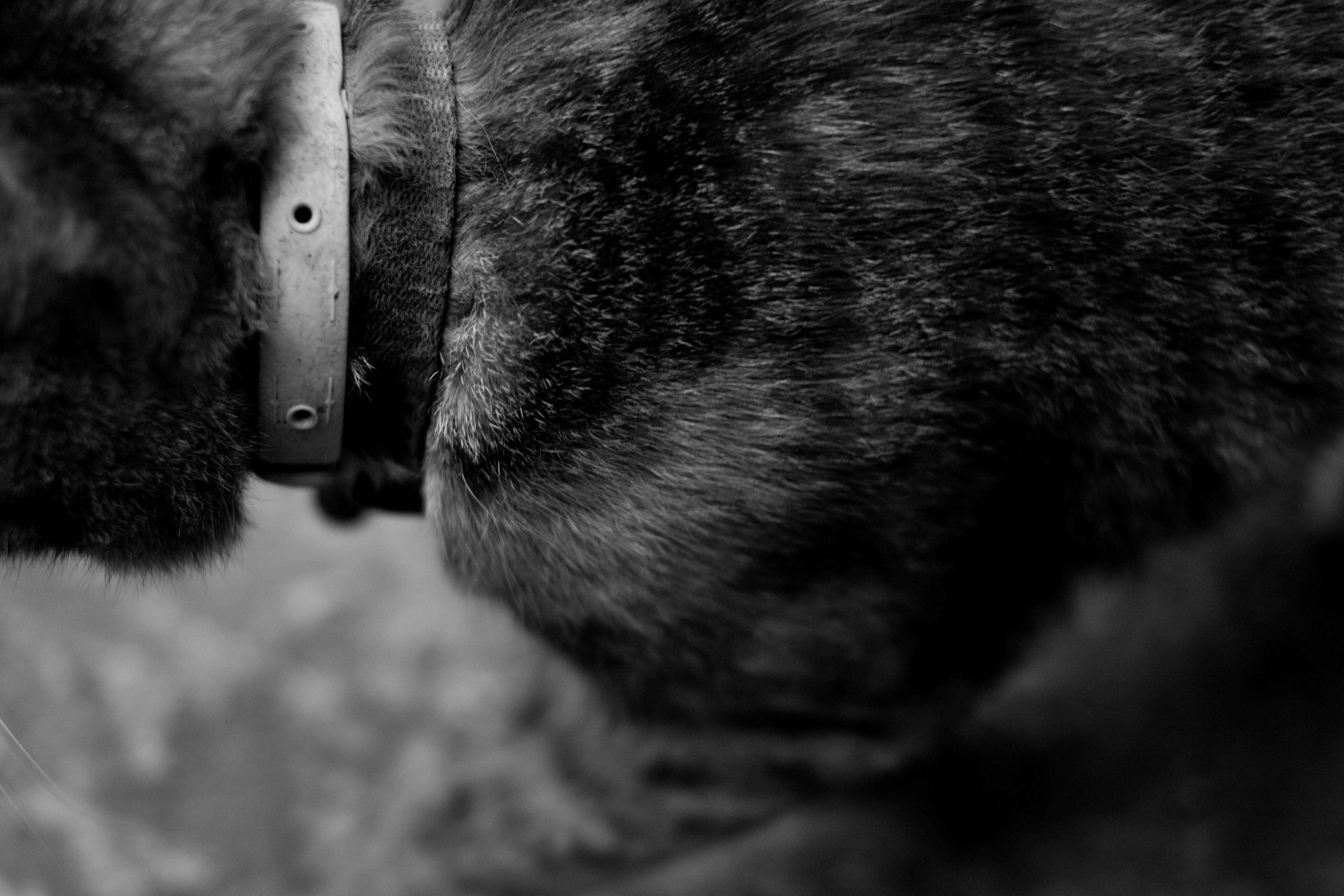 Gato chino callejero.