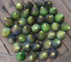 common fig, green, produce, fruit, food,