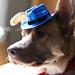Day 256 | Shiny hat by hawkgaar