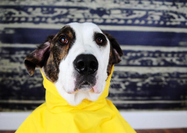 Day 321 raincoat (3)
