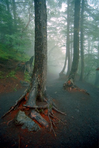 Below the Treeline, in the Fog, at Mt Fuji