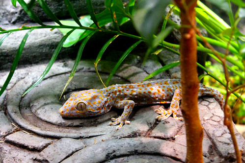 Gecko at the Berkshire Museum