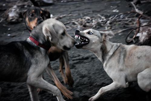 Agressividade em cães - Petlove - O Maior Petshop Online do Brasil