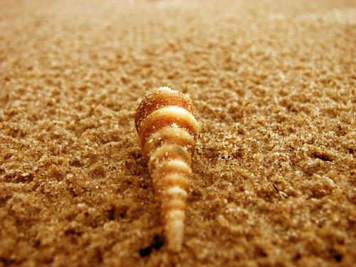 Sea Shell!!!