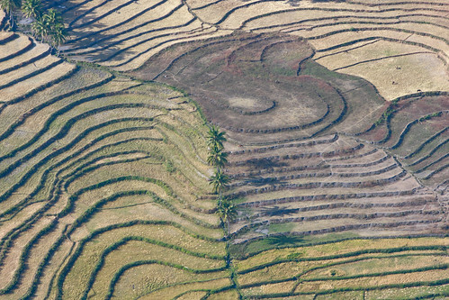 travel newyork nature canon landscape asia southeastasia view rice photojournalism aerial unitednations fields agriculture unphoto timorleste baucau