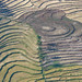 Sculpted Landscape: Rice Fields in Timor-Leste