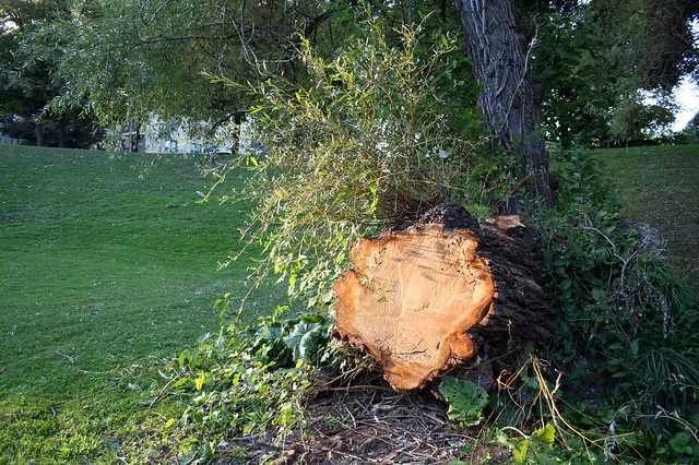 how to cut down a tree in toronto