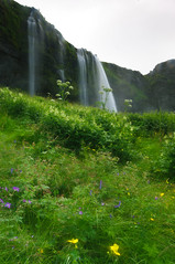 Waterfall with wildflowers