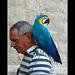 A forest bird never wants a cage.  Henrik Ibsen  by allfr3d