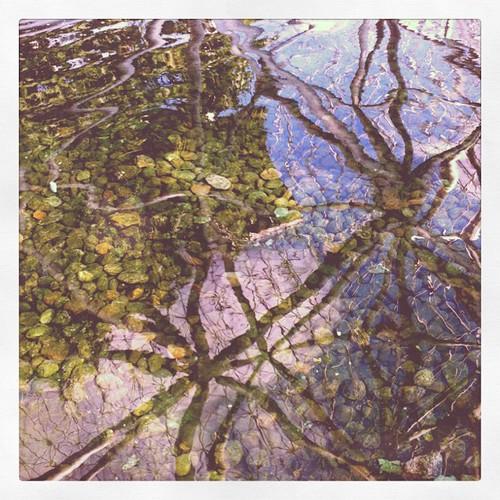 Reflections of Biosphere. #tmfinyul #water