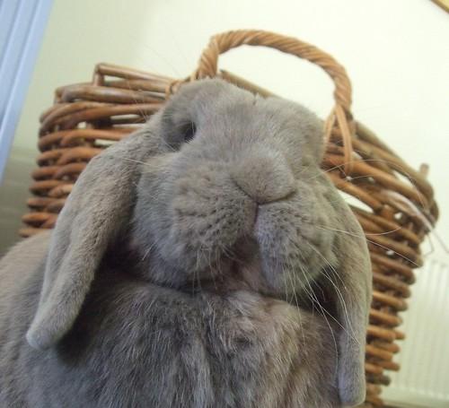 Bibi Bunny