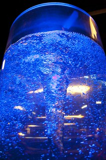 Exploratorium After Dark: BLUE