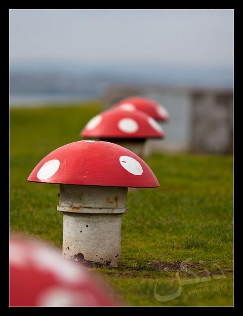 Magic Mushrooms?
