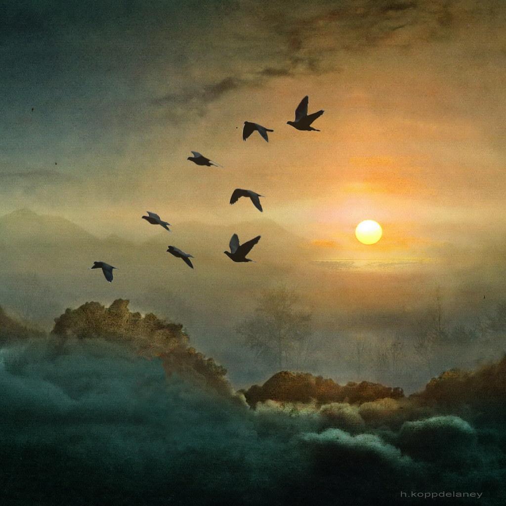 Eight Flying Doves