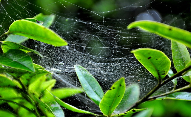 Web of Rain Drops
